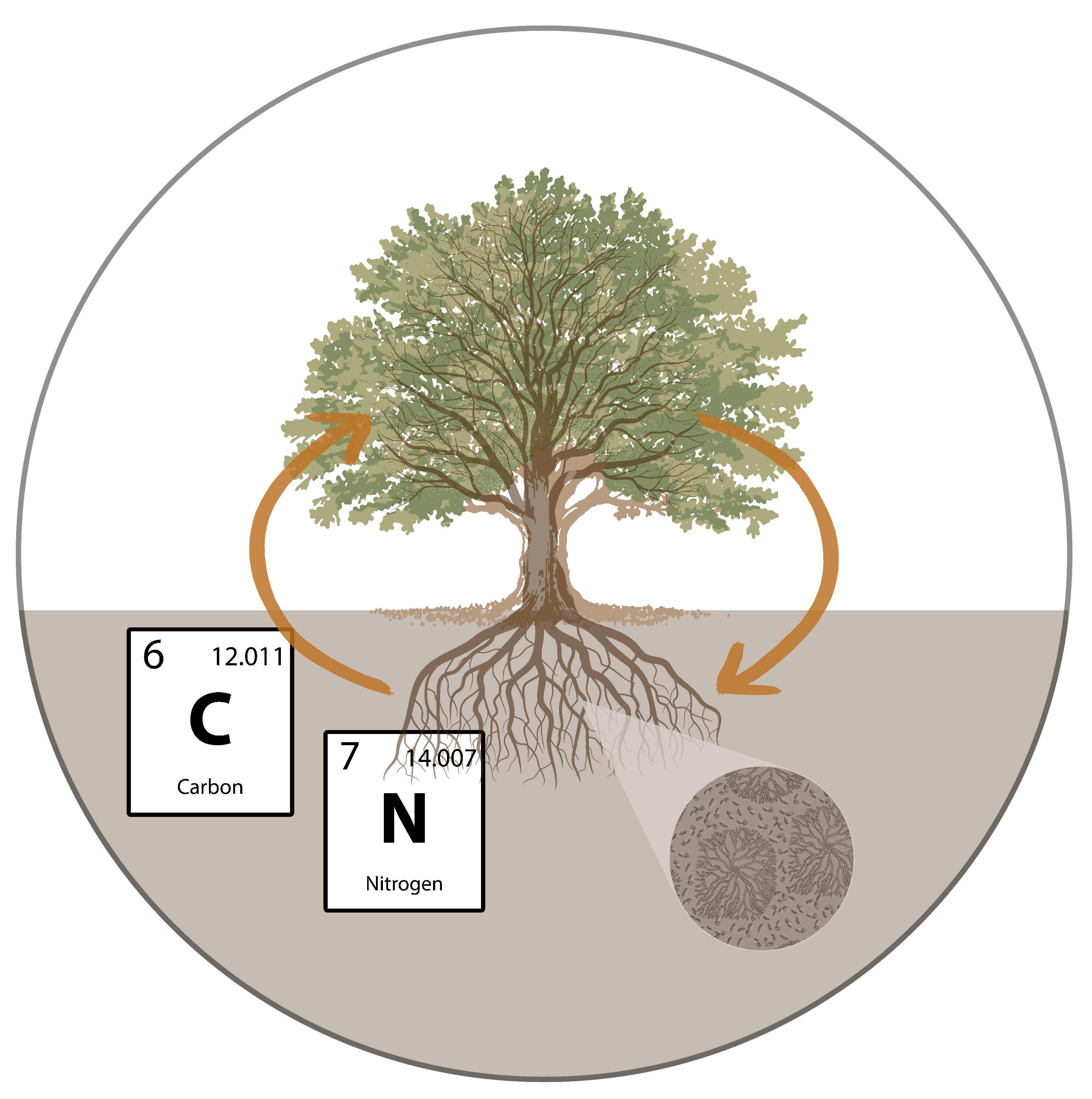 Tree Diagram_V6